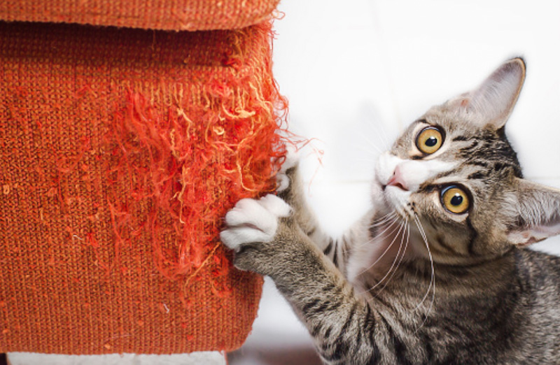 Tabby moggy causes household damage