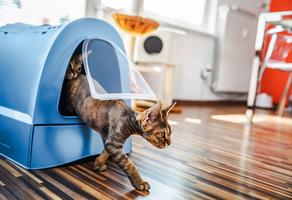 Cat leaving a covered litter tray