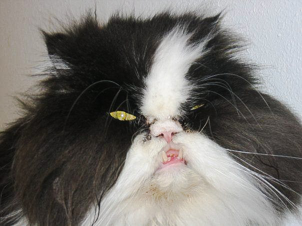 Picture of an ugly cat