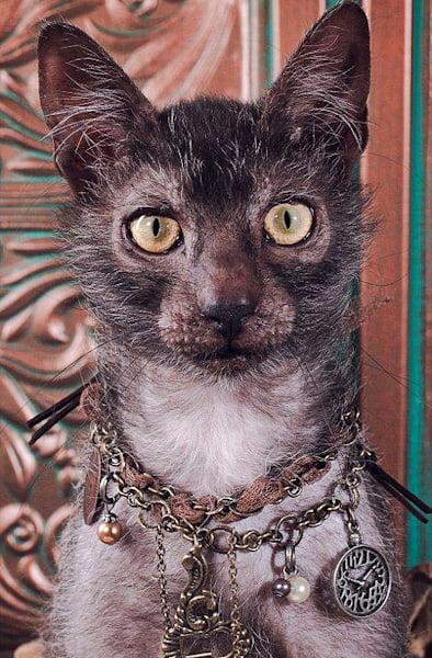 Aloof self-centered cat?