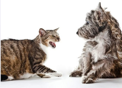 Cat-dog face off