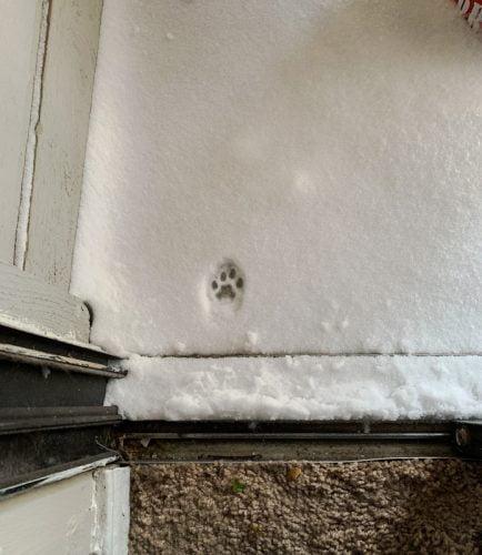 Cat paw print in snow