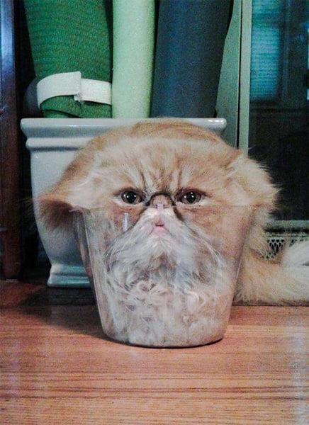 Cats are liquid meme