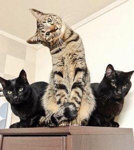 Cute cat stare!