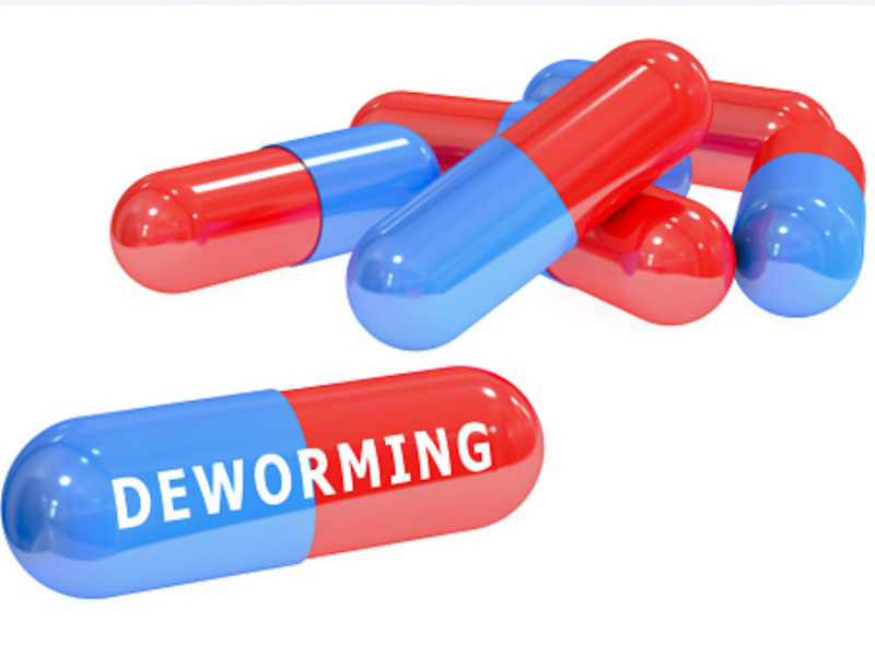 Deworming pills for cats