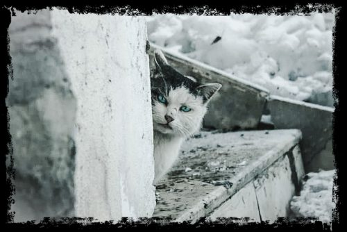 Feral cats in winter are vulnerable to harm
