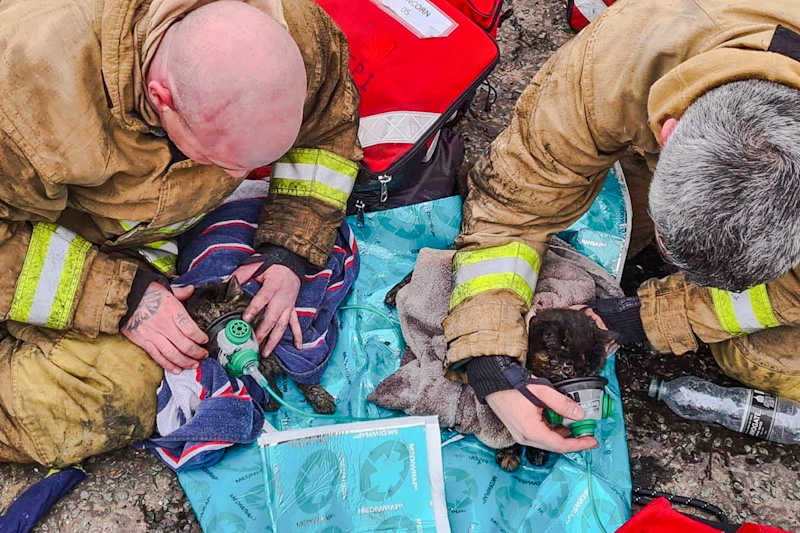 Firefighters give oxygen to two domestic cats rescued from a fire