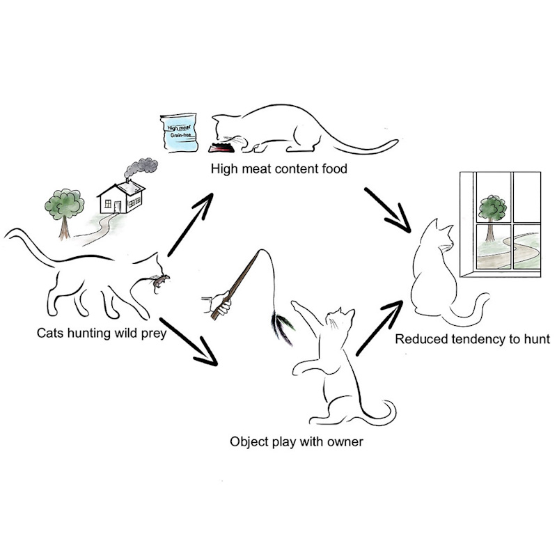 Feeding domestic cats wet food which is grain-free and which derives protein from meat plus play reduces predation on birds and mammals