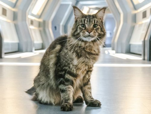 Grudge the Maine Coon cat actor in Star Trek Discovery