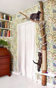 Indoor catification or cat environment enrichment looks great
