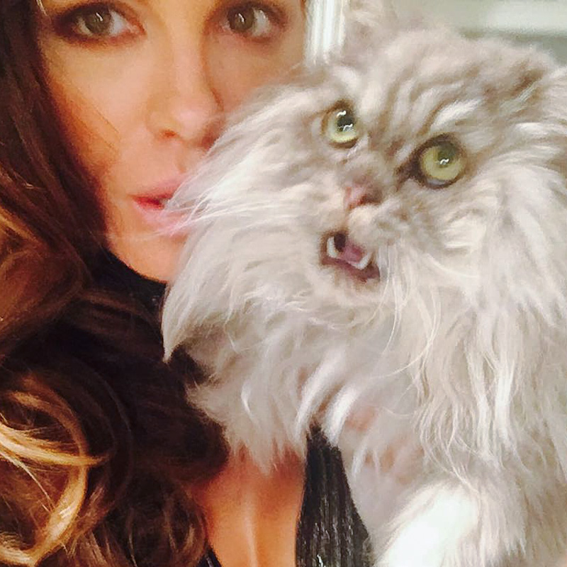 Kate Beckinsale and Clive her grey tabby flat-faced Persian