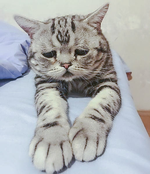 Picture of the saddest cat