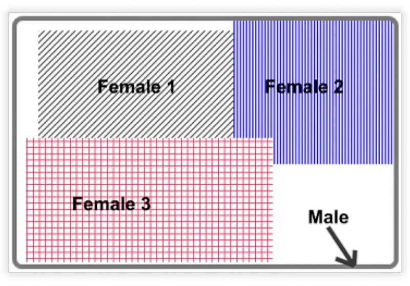 Social organisation of male and female tigers showing schematic of male tiger range