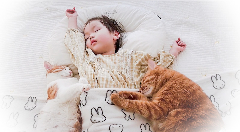 Ultimate picture of child sleeping with cats