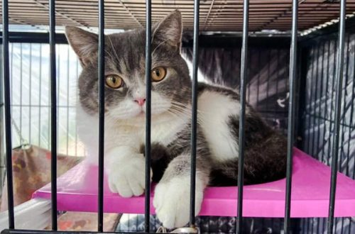 6 purebred cats seized by law enforcement in Thailand