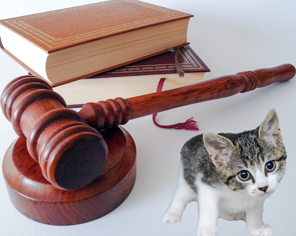 Are feral cats protected by law?