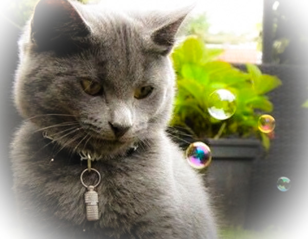 Bubbles as a source of entertainment for domestic cats and dogs