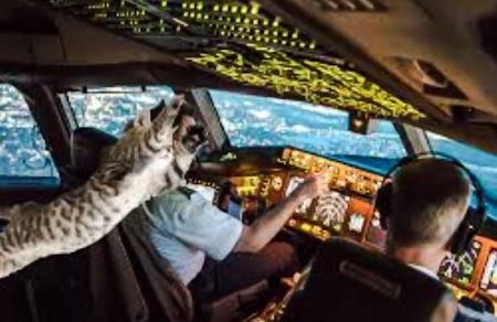Cat attacks pilot of aircraft mid-flight
