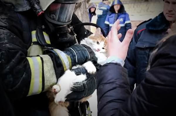 Cat revived from near death when pulled from fire