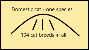 Chart showing one cat species the domestic cat from which all the cat breeds have been carved