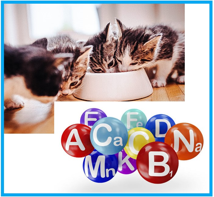 Micronutrients in a domestic cat's diet