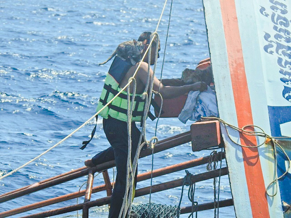 """PETA grants """"Hero to Animals Award"""" to the Thai Navy for their rescue of 4 cats from a sinking boat."""