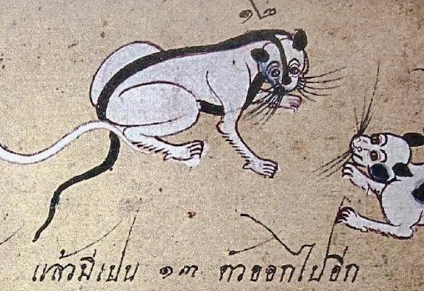 Strange bicolour pattern on ancient drawing of Thai cat