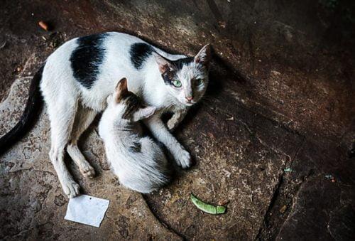 Stray cat Mumbai India