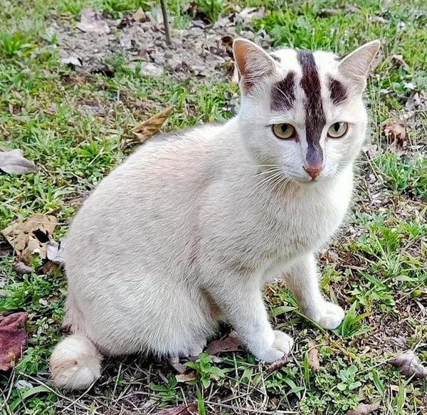 Super rare bicolour pattern on off-white cat