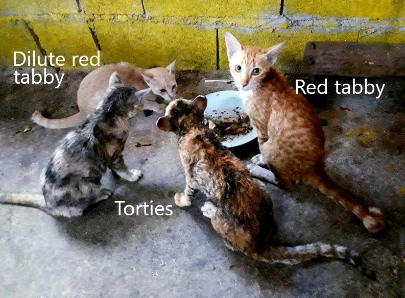 The 4 cats rescued by the Thai navy