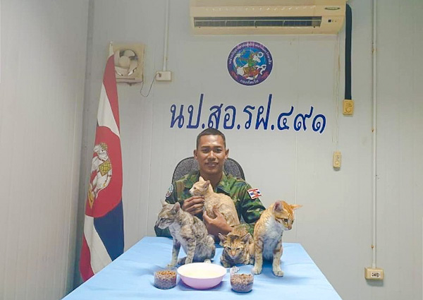The cats rescued by the Royal Thai navy