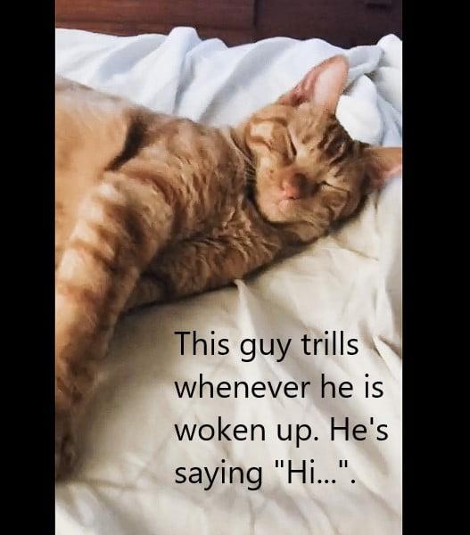 Trilling cat says 'Hi'