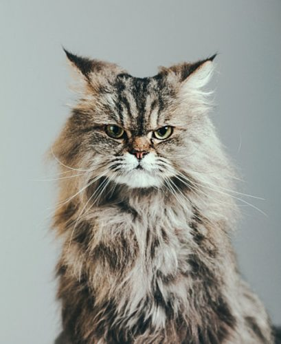 Unhelpful and aloof domestic cat?