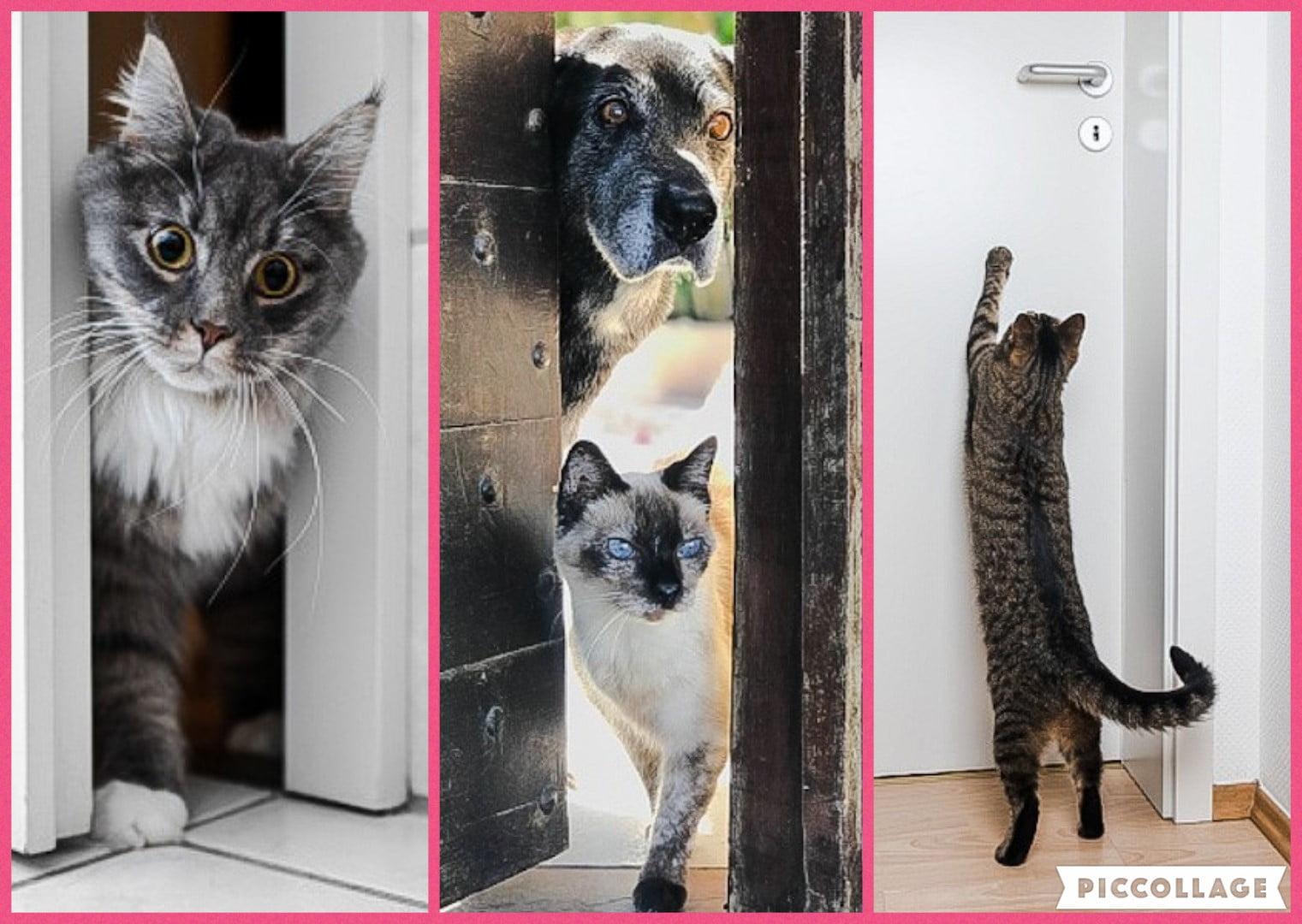 Why do cats dislike doors?