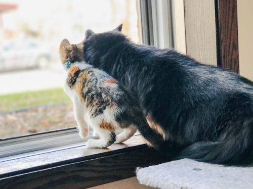 Adult cat immediately bonds with newcomer kitten