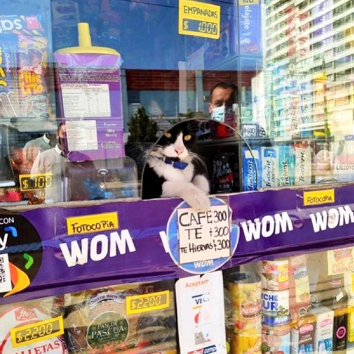 Bodega cat waiting to serve the next customer