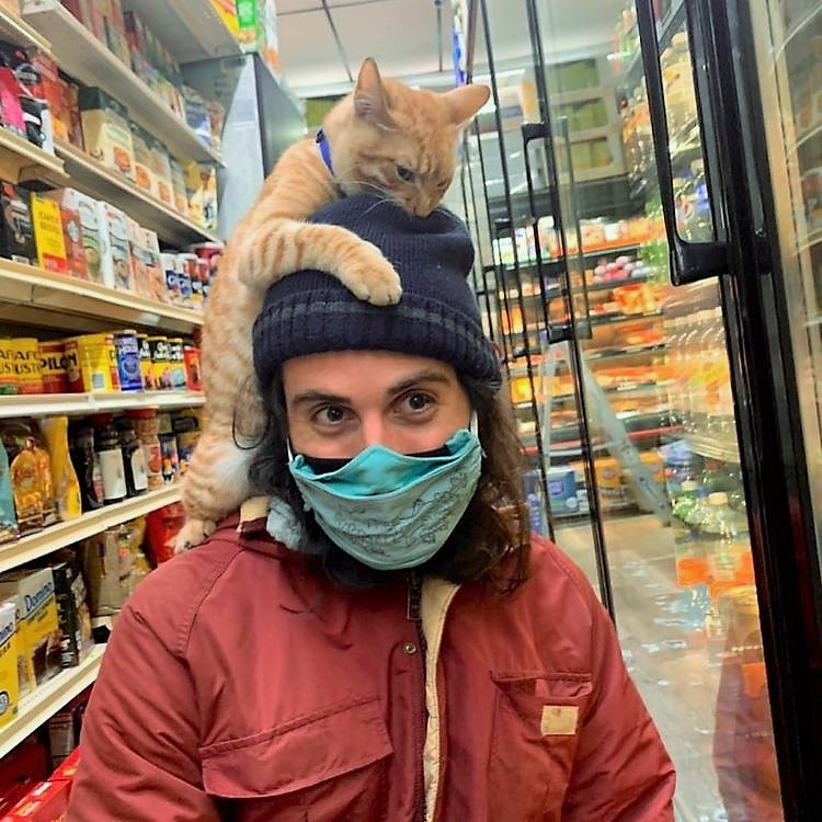 Bodega cat finds a friendly customer to climb on