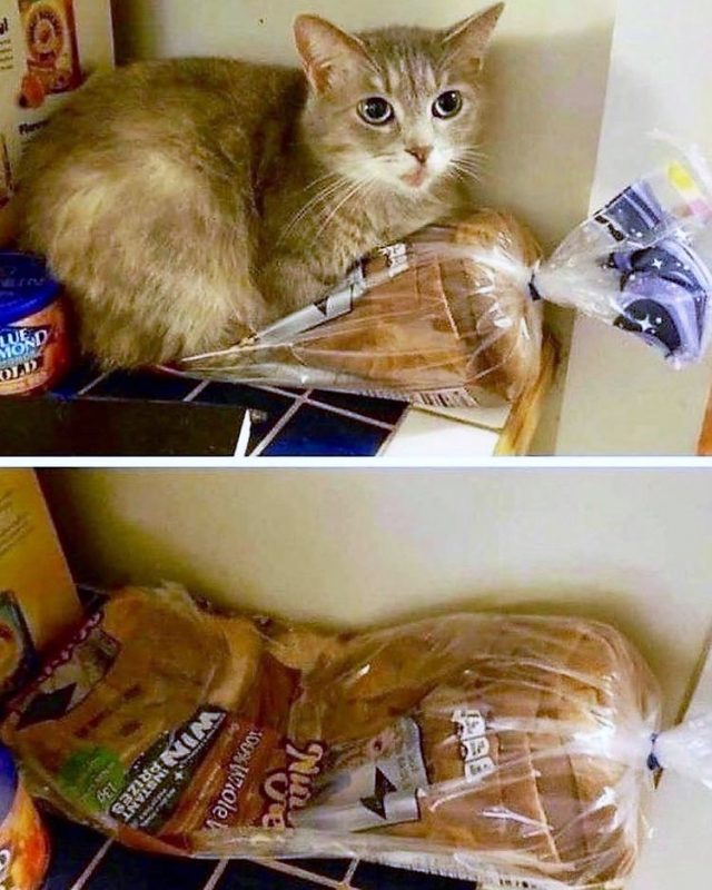 Bodega cat squashes the toasting bread and who cares!