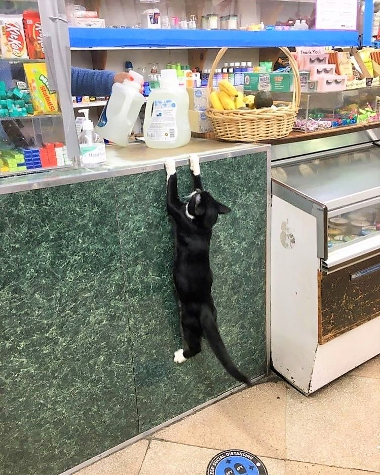 Bodega cat insists on equal rights with humans and why not?