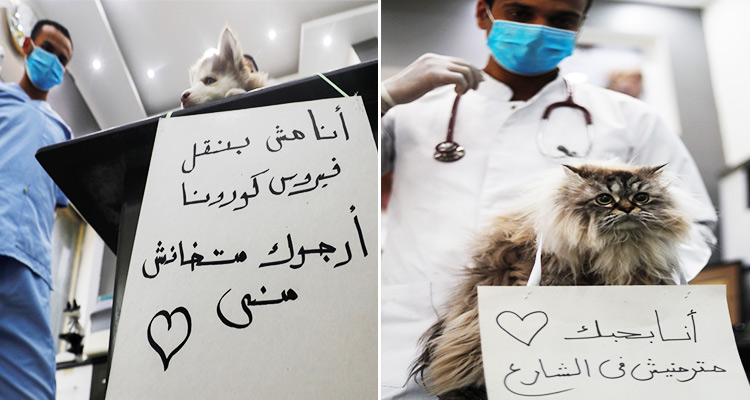 Cairo cats and dogs tell the citizens that they are not a risk in spreading Covid-19 to humans