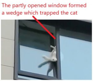Cat in Russia wedged in partly opened apartment window that opens horizontally