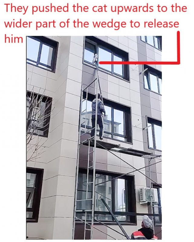 Cat in Russia wedged in partly opened apartment window that opens horizontally who was rescued by guys using scaffolding
