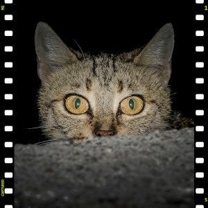 Can domestic cats be scared of the dark?