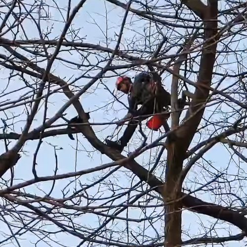 Cat rescued from tree by Erick Baker of Tip Top Tree Care LLC