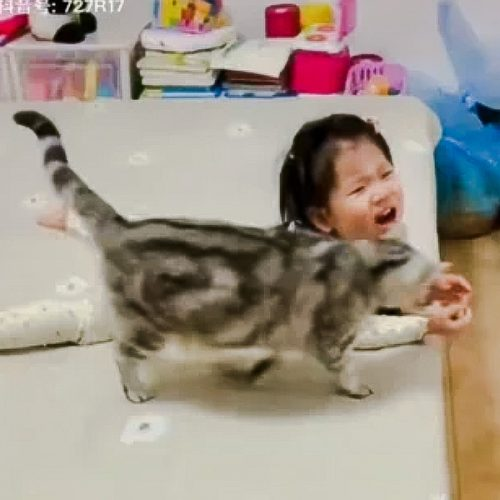 Cat stops girl from falling off furniture? Or is it scent exchange?