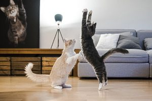 Cats play on fake wood flooring which may contain phthalates which are poisonous to humans and animals