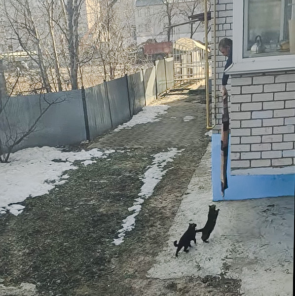Couple of cats in Russia have a novel way of getting inside with the help of their human friend