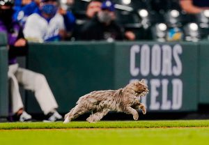 Feral cat runs onto Coors Field mid-match. Cute looking cat by the way.