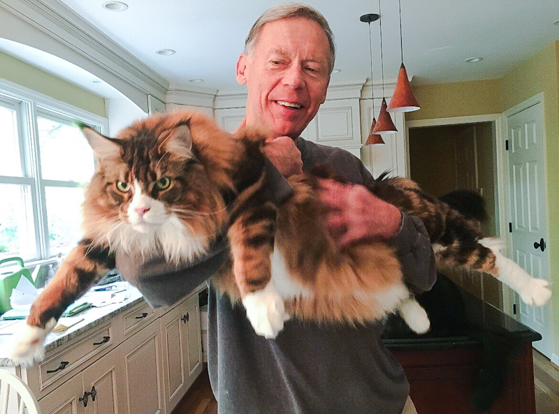 Freddie a Maine Coon who carries a mutated gene causing HCM.  This is Kathy Janson's husband Michael and Freddie