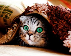 Hiding is one possible sign of stress in a domestic cat